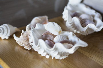 Close-up of conch shells on a table at home