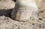 Horse hoof stands on ground