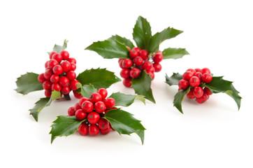 Ilex - Beeren und Blätter