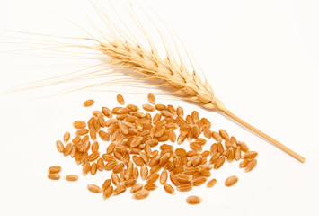 Wheat ears and seed isolated on a white