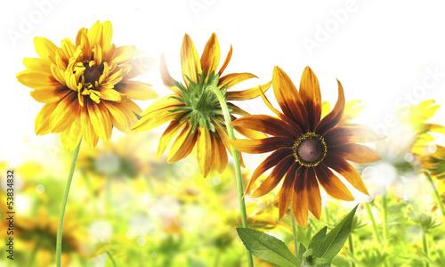 In de dag Bloemen kwiaty