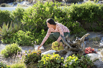 Woman plucking flower in vegetation