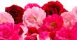 Rosenblüten-Hintergrund