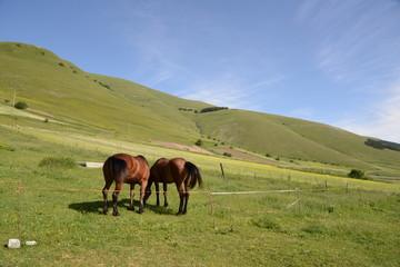 cavalli a castelluccio
