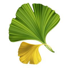 creative foliage, illustration of ginkgo leaves isolated