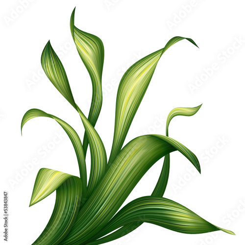creative foliage, green leaves and grass illustration