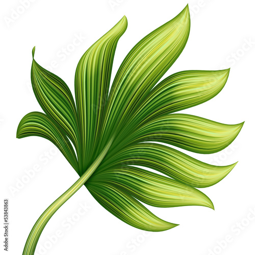 creative foliage, green exotic leaf illustration