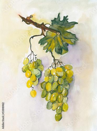 Grape - 53848462