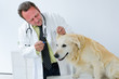 tierarzt untersucht einen hund