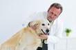 tierarzt horcht einen hund ab