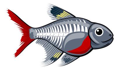 X-ray tetra cartoon fish
