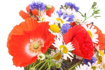 Wiesenblumen, meadow flowers