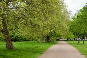 Sentiero tra gli alberi, Hyde Park, Londra
