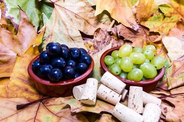 grape for vine