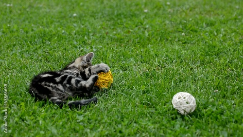Small gray kitten is playing with balls.