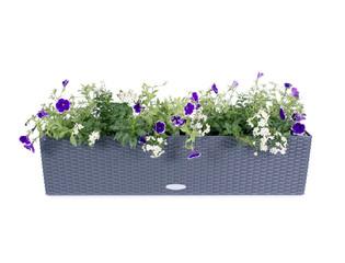 Polyrattan Blumenkasten mit Petunien und Jasmin