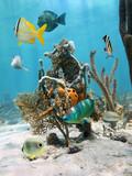 Under water marine life