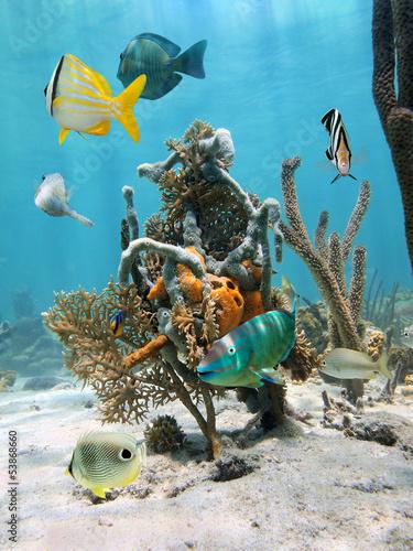 fototapeta na ścianę W ramach morskiego życia wody