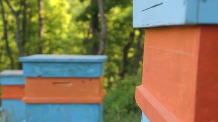 Summer Bees Flying into the Hive Crane Shot Nature BAckground HD