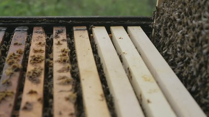 Honey Comb with Bees Pulled out of Apiary HD