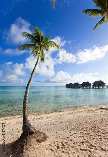 Palm tree on a sandy beach at the cyan sea