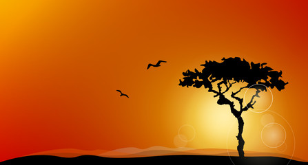 Wüste Sonne Himmel
