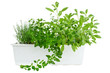 Fresh herbs in planter, thyme, oregano and sage