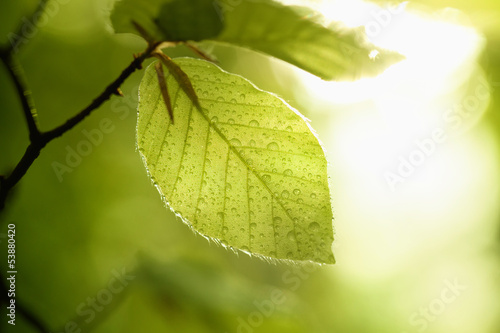 Leaf with raindrops - 53880420