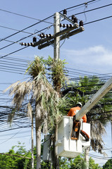 Electrician worker in cherry picker solve palm leaf and protect