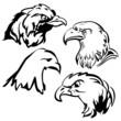 eagle vector doodle  set