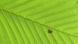 葉とナナホシテントウムシ