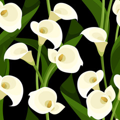 Seamless pattern with white calla lilies on black. Vector.