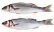 two raw seabass fishes