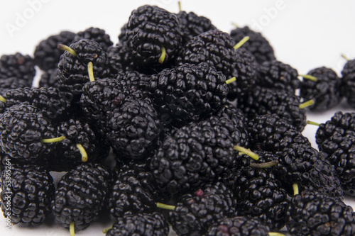 isolated mulberry