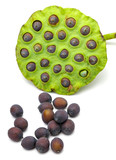 Fresh lotus seeds and pod on white background