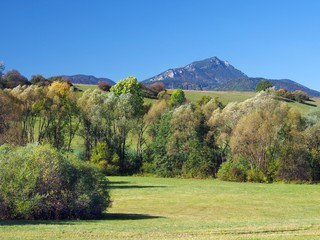 Meadow and Peak of Great Choc Mountain