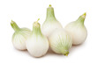 onions white group