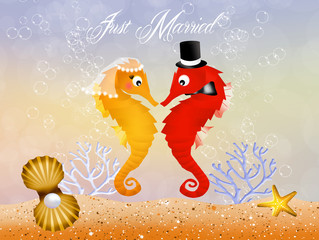 Wedding of seahorses