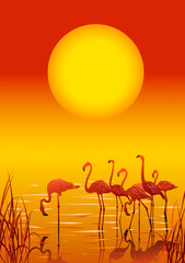 Flamingos in the lake on sunset