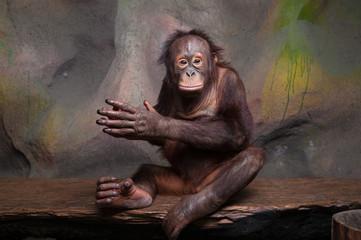 Portrait of Orangutan (Pongo pygmaeus)