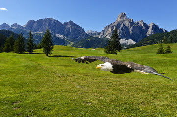 American eagle and dolomites mountains landscape