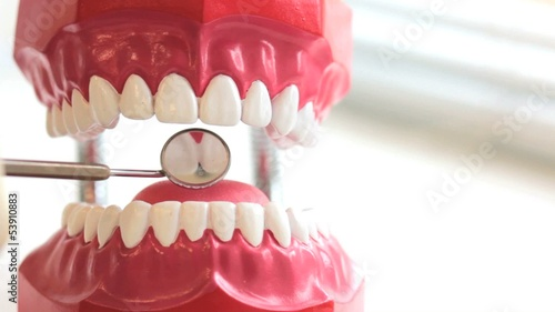 Dentist inspects teeth of toy jaw by mirror