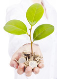 Green plant sprouting from a hand with money, isolated on white