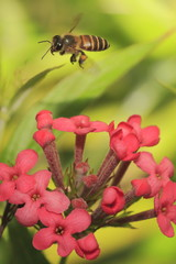 Bee on Flower 2