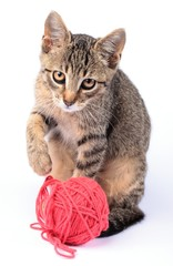 Little cat playing with wool on white background.