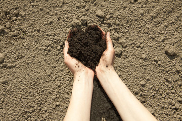 hands with black soil