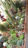 mix of many succulents and cactus with sharp prickles and thorns