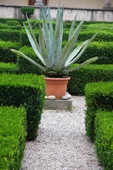 agave and aloe plant in the flower bed of a convent
