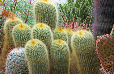 mix of many succulents and cactus with very sharp prickles and t