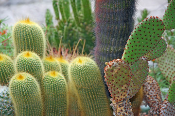 succulents and cactus with very sharp prickles and thorns
